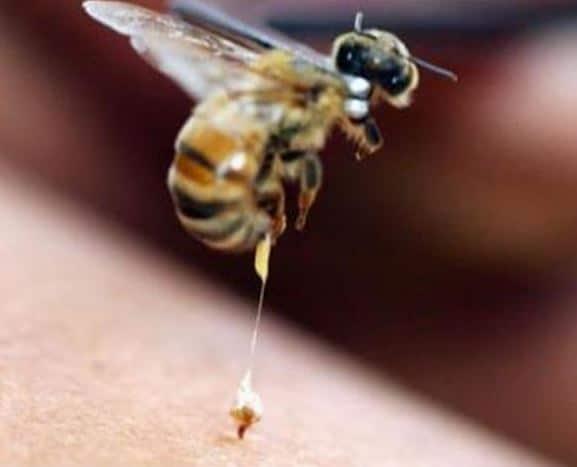 Apitherapie le venin d'abeille c