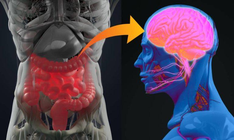 Les meilleurs aliments pour lutter contre l'inflammation de l'intestin et la dépression