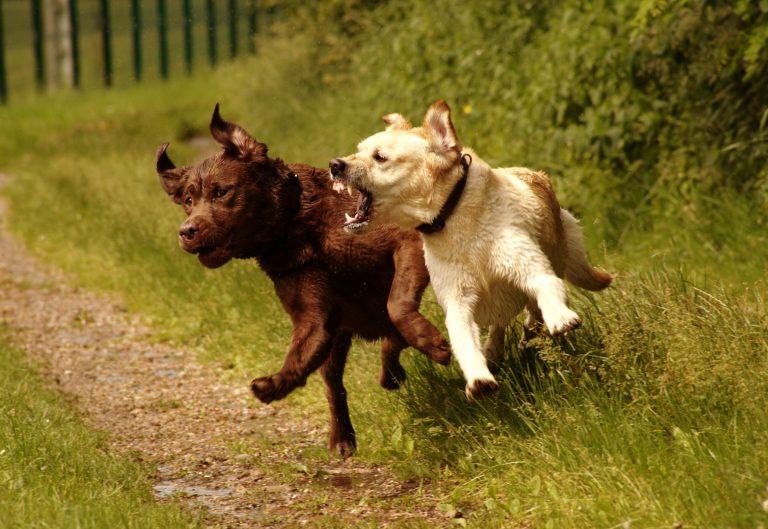 Commettez-vous cette erreur qui peut rendre votre chien agressif