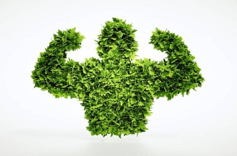 Protéines végétales : on casse les clichés !